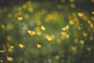 Gele bloem van Yara Verstappen