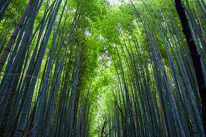 Bamboebos in Kyoto van