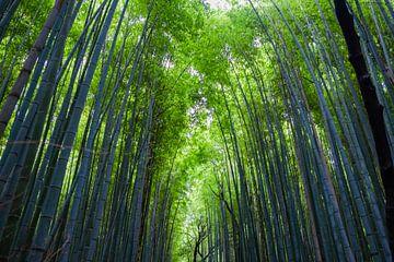 Bamboebos in Kyoto von Ineke Huizing