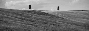 Monochrome Toskana im Format 6x17, Bäume in San Quirico D'Orcia von Teun Ruijters