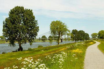 Fietspad langs de Bergsche Maas richting Heusden von Jani Moerlands