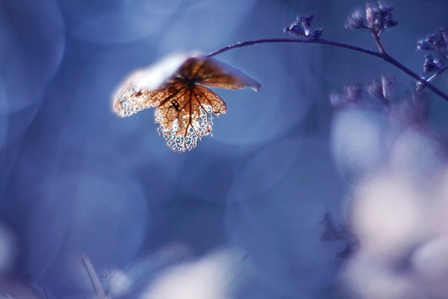 Touched by the light... van LHJB Photography