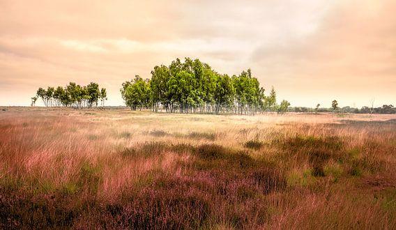 Heathland van Adrien Hendrickx