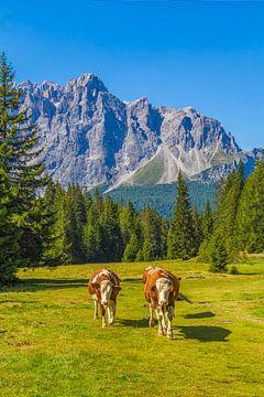 Koeien in de Dolomieten in Italië - 2 van Tux Photography