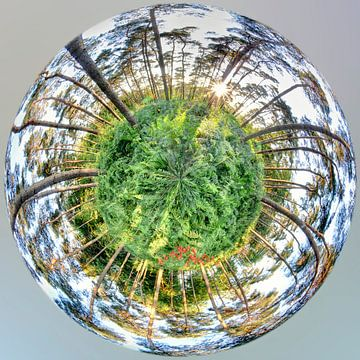 Mini-Planet 360 - Bois de Villers von Paul Marnef