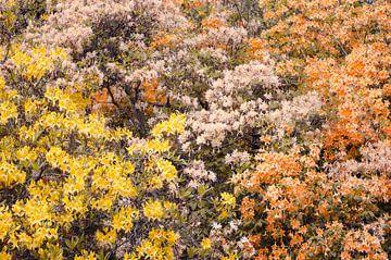 Muur Van Bloemen van Nicole Schyns