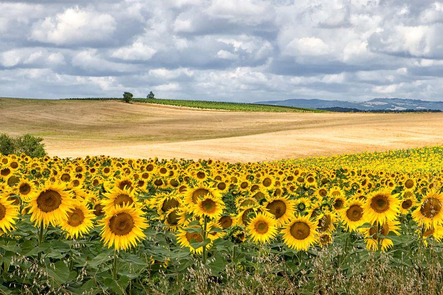 Landschap met zonnebloemen van Fokje Otter