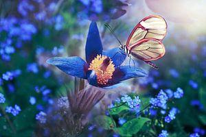 Schmetterling in Weiß auf Blume in Blau