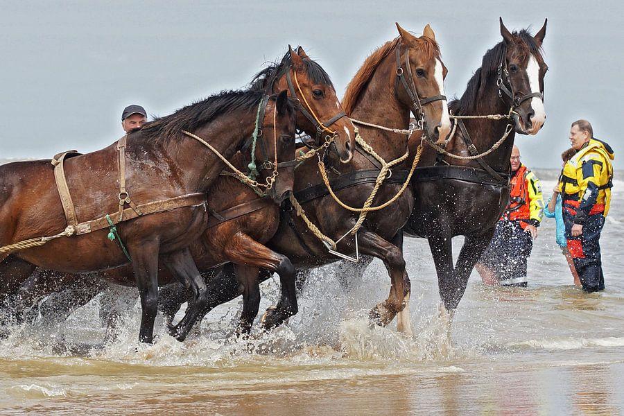 Paarden aan het werk van Dirk van Egmond