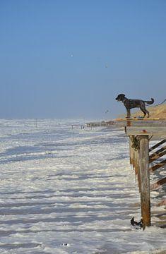 Hond aan zee van Corinna Vollertsen