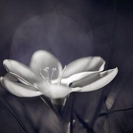 Just a little bit of light.. van LHJB Photography