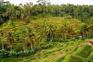 Prachtige rijstvelden in Ubud (Bali) op een regenachtige middag van Ardi Mulder