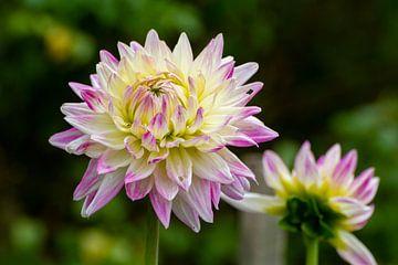 Bloemen van Jolanda van Eek
