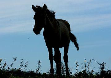 Silhouette van een konik paarden veulen von Saskia Hoks