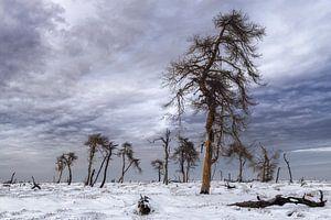 Abgebrannter Wald von Peter Poppe