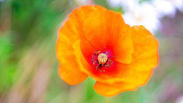 Bloem oranje wilde bloemen van Erwin Heuver