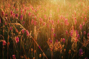 wilde orchidee von Hanneke de Vries-Koning