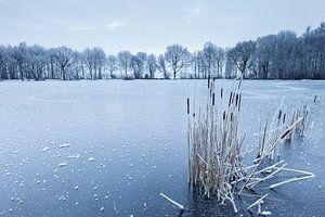 Lisdodde op bevroren meer van