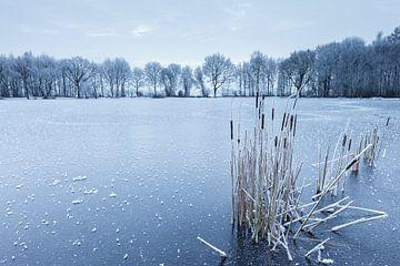 Lisdodde op bevroren meer van Karla Leeftink