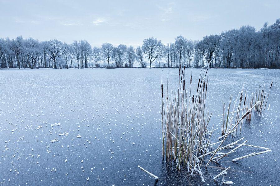 Lisdodde op bevroren meer