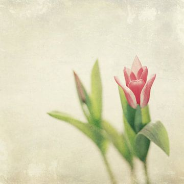 Tulip von Inge Berken