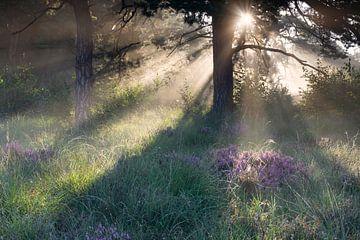 mooie zonnige ochtend in mistige bos in de zomer van Olha Rohulya