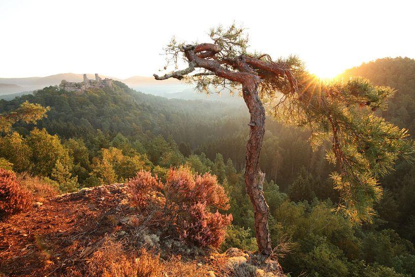 Am Haferfels im Pfälzer Wald bei Dahn von Jiri Viehmann