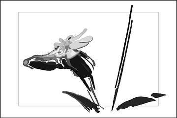 Kuckucksblume von René Roos