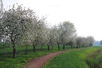 Pommiers en fleurs sur Karina Baumgart