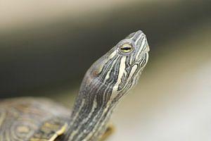 Schildpad von Frouwkje Fotografie
