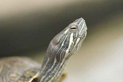 Schildpad van Frouwkje Fotografie