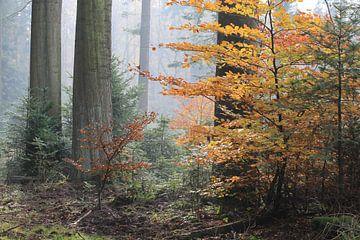 Herfstsfeer. von Patrick Brouwers