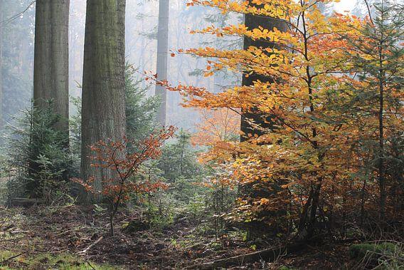 Herfstsfeer. van Patrick Brouwers