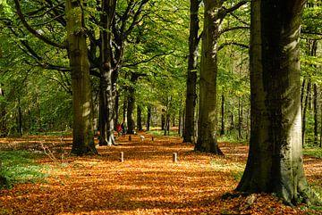 Spanderslaan. Beukenlaan in het Spanderswoud bij Hilversum von Martin Stevens