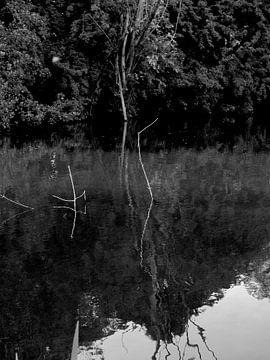 Vondelpark reflections van