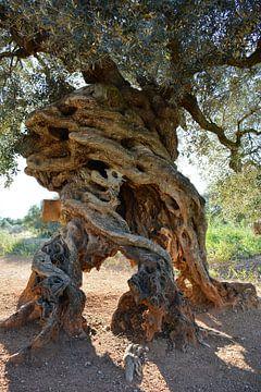 Eeuwenoude olijfboom in de Alentejo, Portugal van My Footprints