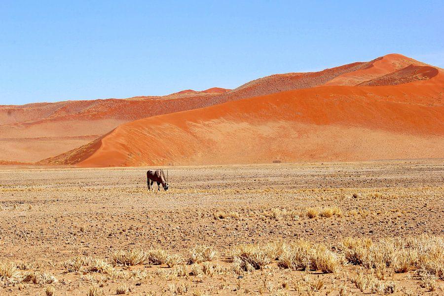 Gemsbok rode zandduinen woestijn, rust en ruimte