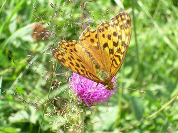 De vlinder van Amber van den Broek