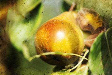 Vintage picture of Gieser Wildeman pear in warm autumn colours van