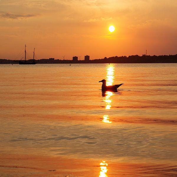 Seevogel im Abendlicht