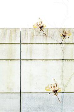 Takken muur van Akira Peperkamp