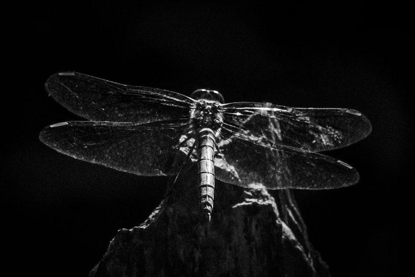 Steenrode heidelibel van Arjan van de Logt