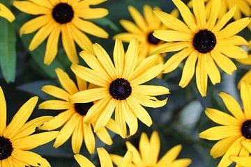 Gelbe Blumen von Teresa Bauer