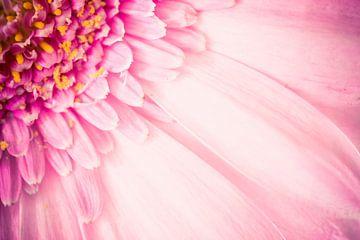 Flower sur Geert Huberts