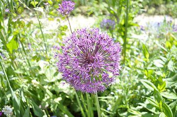 Flowers 4 van Lyn Van Veldhoven