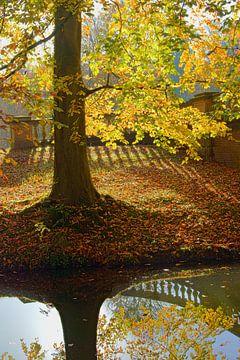 Beuk in herfstkleuren van Michel van Kooten