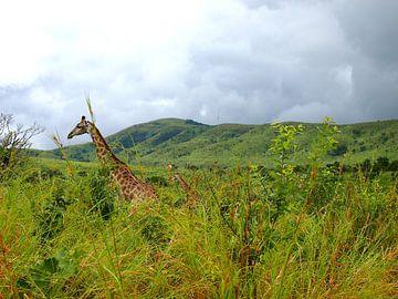 Giraffe in Südafrika van Patrick Hundt