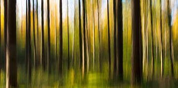 a forest van Lex Scholten