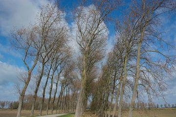Bomenrij Noord beveland van Teus Reijmerink