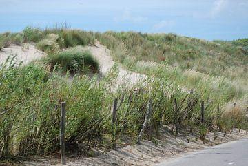 Schilderachtige foto van duinen van Suzanne Brok